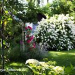 Wildrose im Landhausgarten