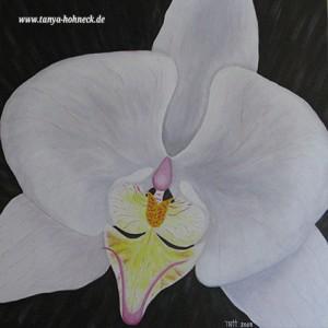 Orchidee Weiß Phalaenopsis Acrylfarbe Bild