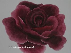 Rose rot Acrylbild